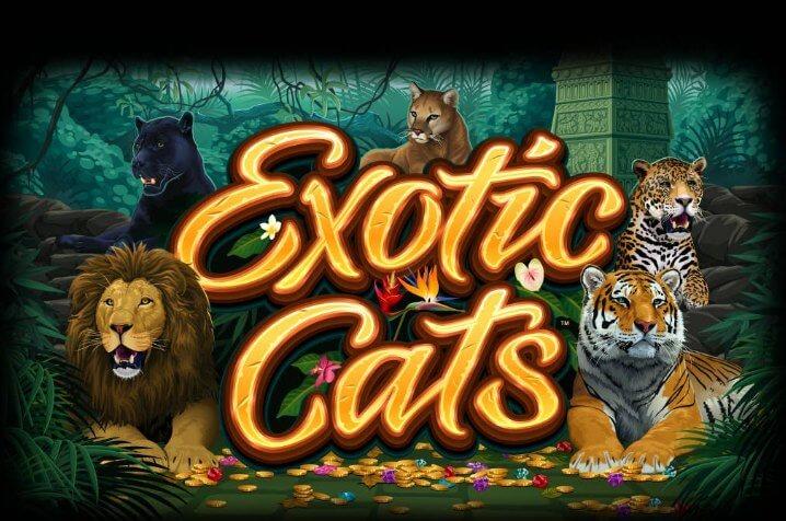 Vind på 243 måder i Microgamings spilleautomat Exotic Cats